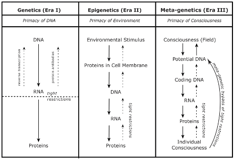Figure 1: Flow of Genetic Information. The above chart summarizes the distinct ways in which genetics, epigenetics and meta-genetics explain the flow of information in biological organisms.